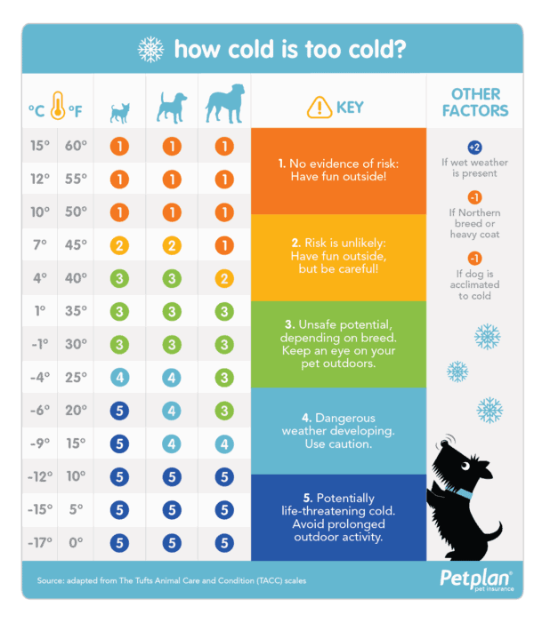 How cold is too cold for dogs chart