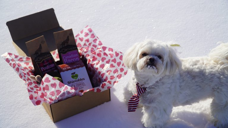 Maltese Standing Beside WoofCrate