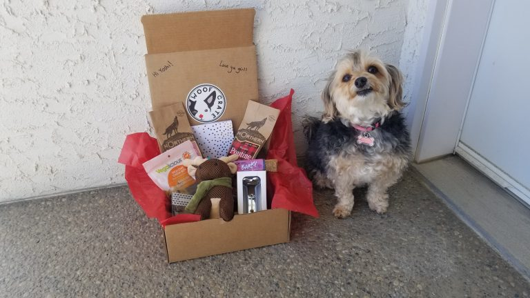 Cute Yorki Sitting beside WoofCrate